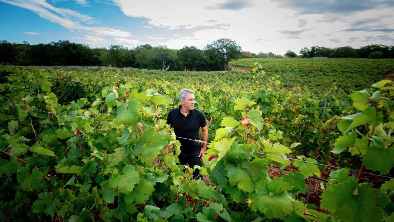 I segreti del vino Primitivo e le particolarità del Primitivo DOC Gioia del Colle